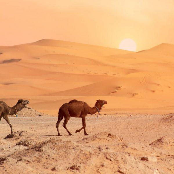 desert-4990324